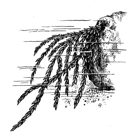 Споровые растения - i_003.png