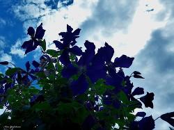 Синее солнце - Юдичева Нина